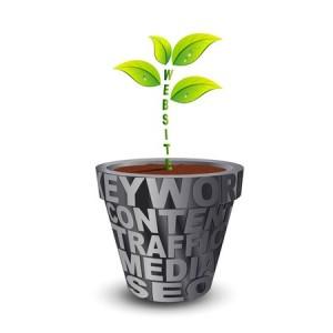 Website Plant