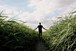 High Grass